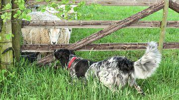 Landelijke ontmoeting tussen hond en schaap van Ruud Overes