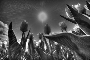 Tulpen in zwart wit van