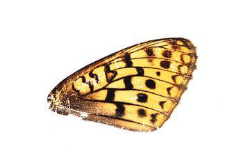Schmetterlingsflügel von Douwe Schut