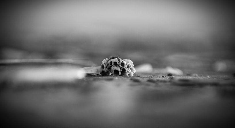 seashell van Stephanie Prozee