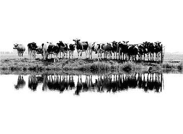 cows in a row (zwart/wit) van Annemieke van der Wiel