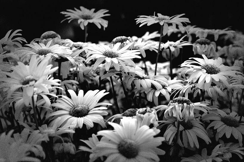 Bloemen (zwart-wit) van Rob Blok