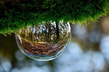Herfst in een lensbal van Koen van de Laar