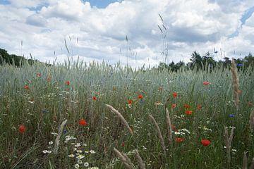 Korenbloemen voor een veldboeket van Cilia Brandts