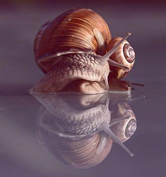 Dansende slakken von Nathalie Jongedijk