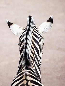 Portret van een zebra van