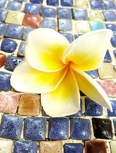 Bloem van een frangipani op een mozaïek gekleurde steentjes in Vietnam (staand)