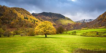 Herbstbaum in der Landschaft, Seengebiet von Rietje Bulthuis