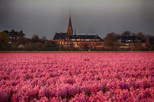Hyacintenvelden rondom Lisse, Noordwijkerhout