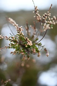 Winter floral van Femke Sijtsma