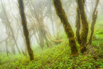 Regenwald von Chris Stenger