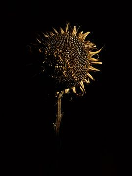 zonnebloem van Ton Dopping