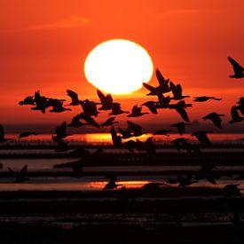 Ganzen bij zonsondergang van Arjan Dijksterhuis