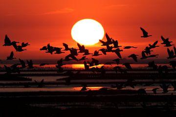 Gänse bei Sonnenuntergang von Arjan Dijksterhuis