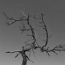 Toter Baum von Andreas Stach