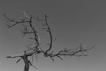 Toter Baum von