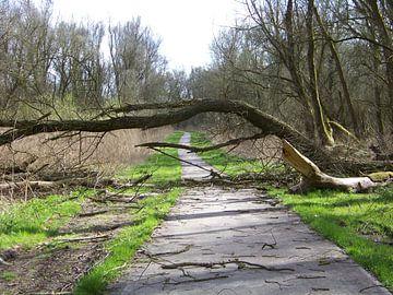 Storm van Sander Frankfoort