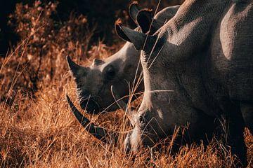 Witte-neushoorn moeder met haar kind van Pepijn van der Putten