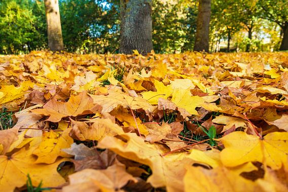 Autumnal colored foliage on the ground