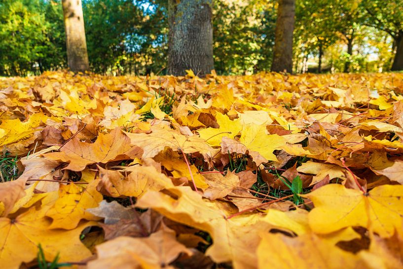 Autumnal colored foliage on the ground van Rico Ködder