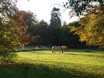 Twee paarden van Rinke Velds