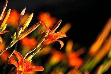 Lilien von Thomas Jäger