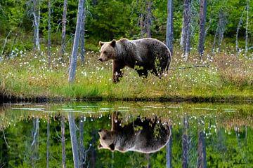 Braunbär mit Reflexion von Merijn Loch