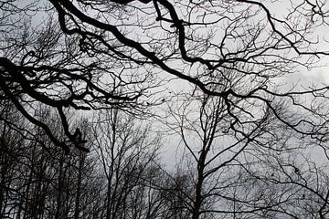 Vogels in bos bij Katlijker Schar von Jan Sloothaak