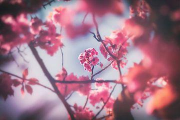 Japanische Kirsche - Zierkirschbäume im botanischen Garten in Duisburg von Jakob Baranowski - Off World Jack