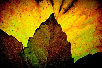 Herbstblätter 12 von Henk Leijen