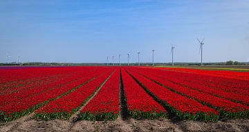 Bollenveld in de Flevolandse polder van Pascal Raymond Dorland