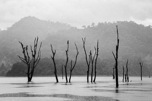 Dode bomen in stuwmeer in Khao Sok, Thailand van Johan Zwarthoed