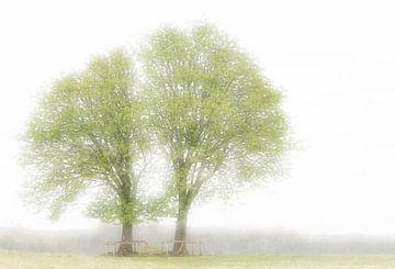 Tweeling bomen in voorjaarskleed van Boudewijn Swanenburg