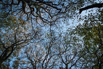 Blauwe lucht in het bos van Linsey Aandewiel-Marijnen