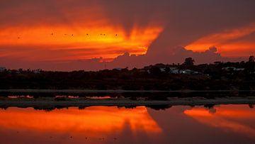 Flamingo sunset von Marina Nieuwenhuijs
