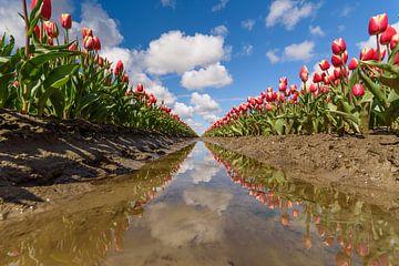 Tulpen von Ellen van den Doel