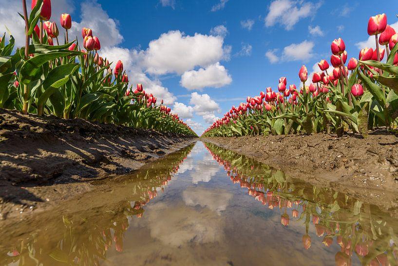 Tulpen van Ellen van den Doel