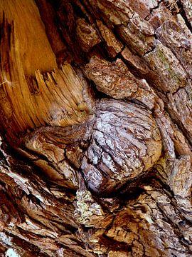 Geheimnisvolle Welt der Bäume (1) van Heidrun Carola Herrmann