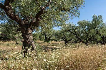 Olivenbäume auf Zakynthos von Margreet Riedstra