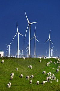 Schapen en windmolens