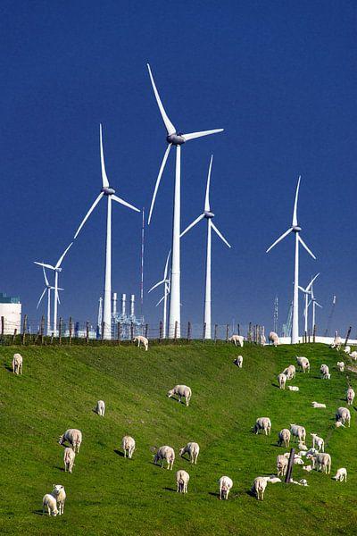 Schapen en windmolens van Harrie Muis