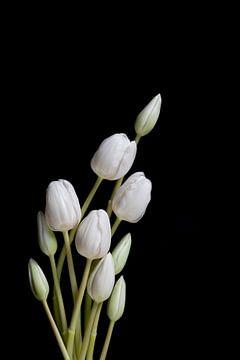 Holländische Tulpen von Marieke Tegenbosch