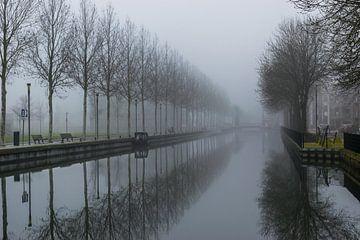schöne Spiegelung einer Baumreihe im Wasser