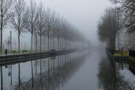 mooie reflectie van een rij bomen in het water