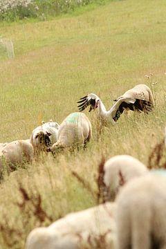 Een ooievaar kudde de schapen... van Anja Bagunk