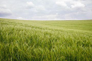 Weizenfeld von Johan Vanbockryck