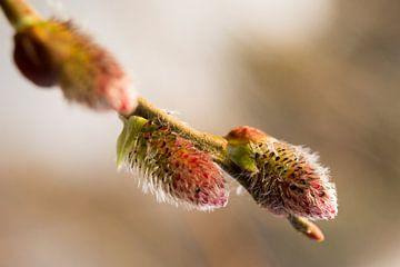 voorjaar met uitlopende knop van E.M Hak
