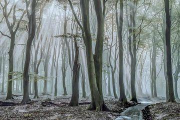 Licht in der Dunkelheit von Niels Barto