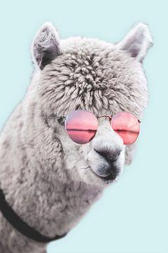Alpaca Gast van Ms Sanderz