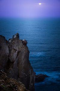 Ooievaar aan de kust van Cabo Sardao